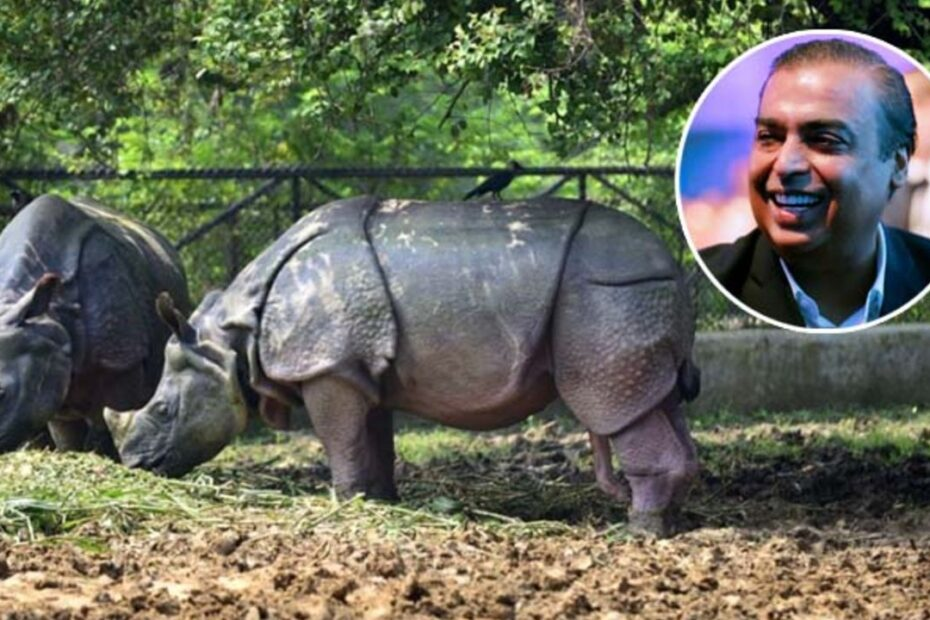 India's Richest Ambani Family Unveil Plan to Build World's Biggest Zoo